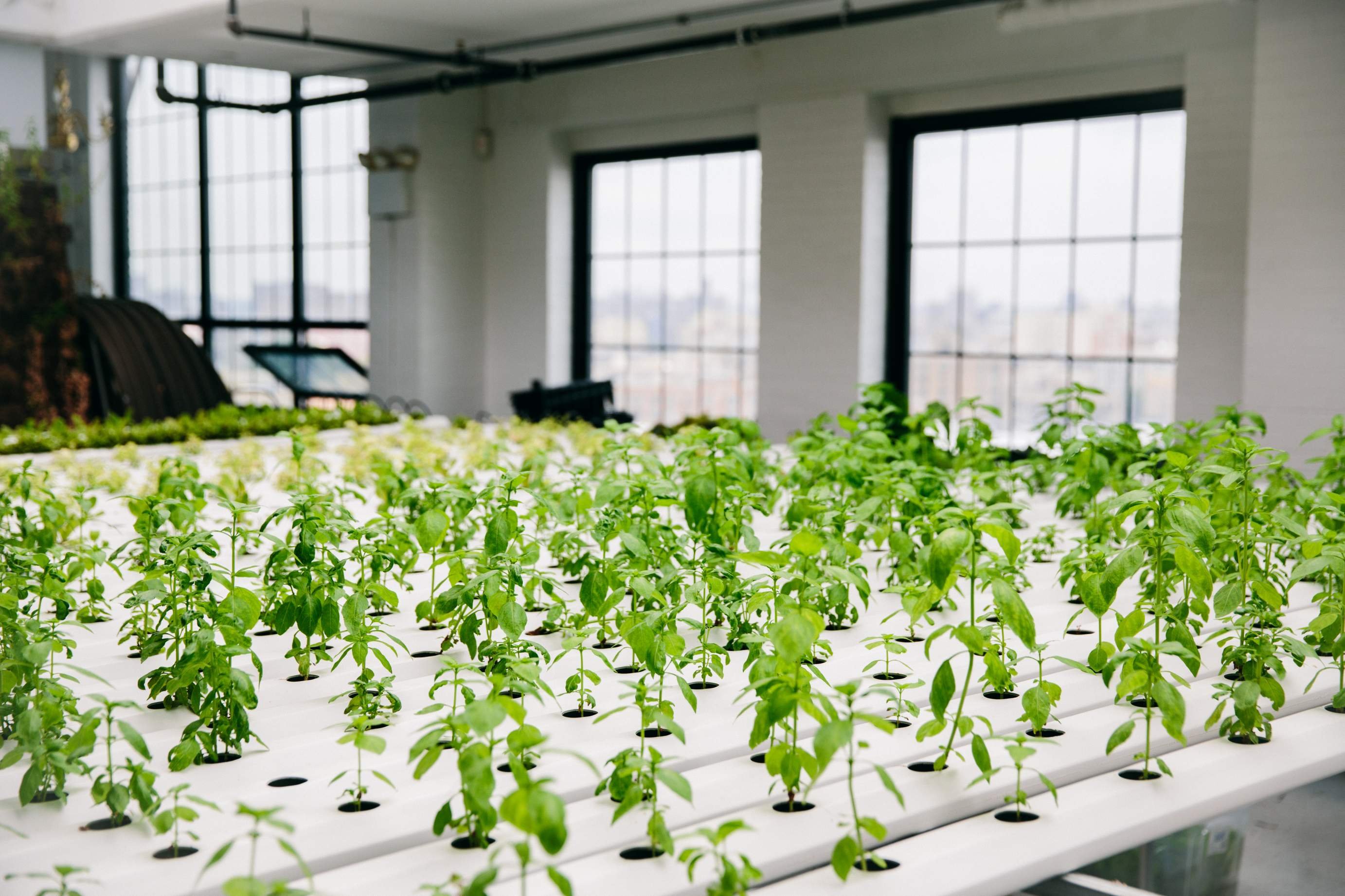 White apron project - The Apron Project Green Bronx Machine