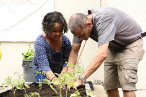 Planting at PS55