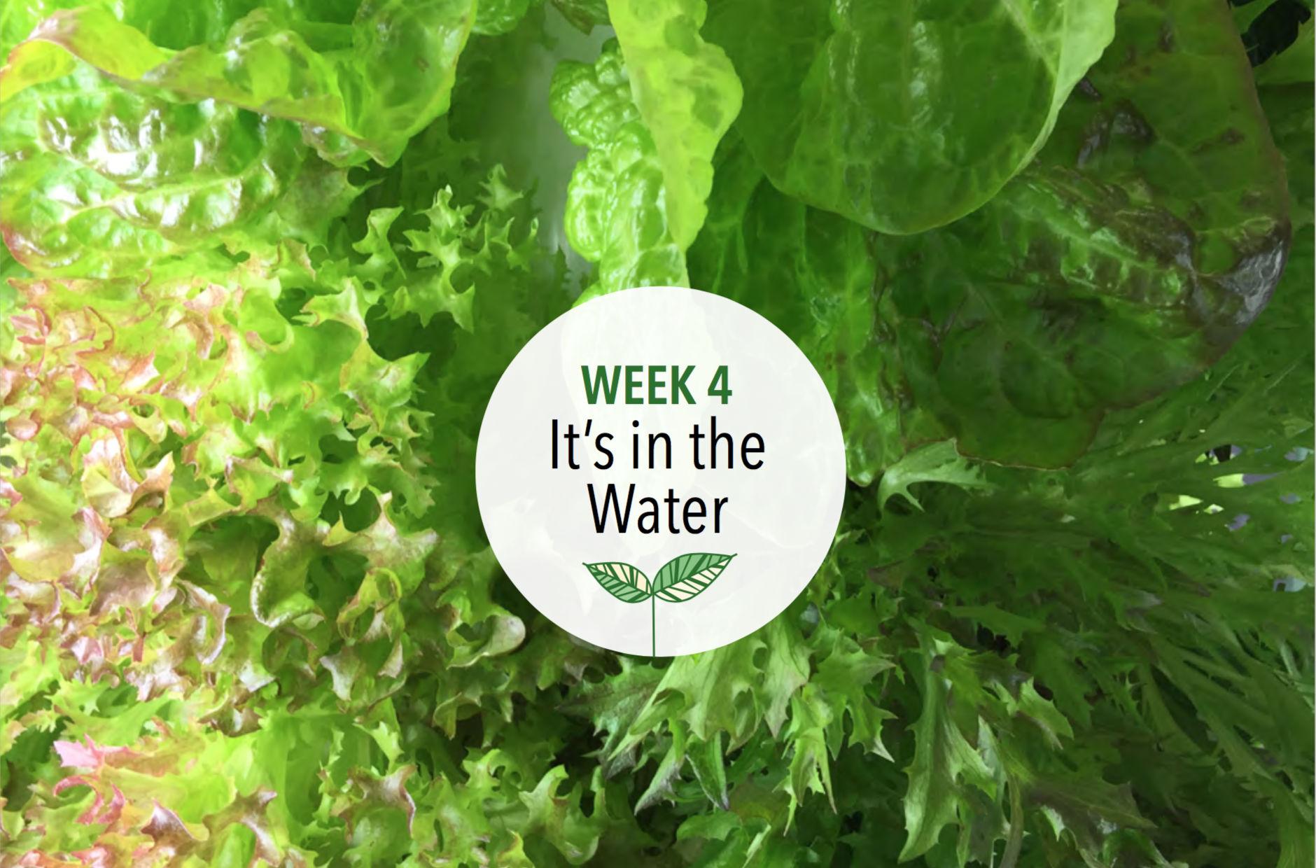 Week 4: It's in the Water