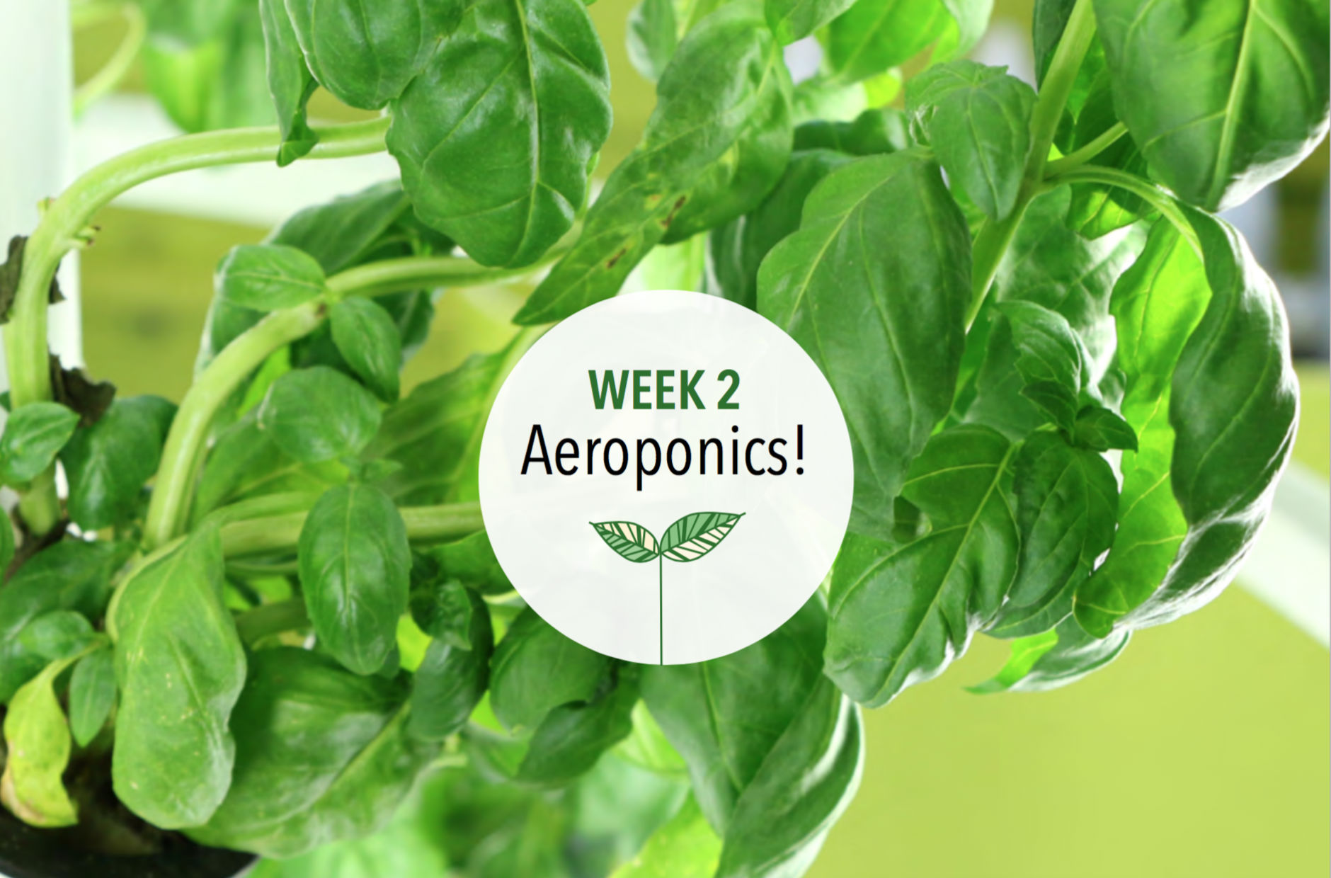 Week 2: Aeroponics!
