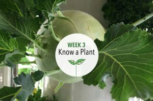 Know a Plant