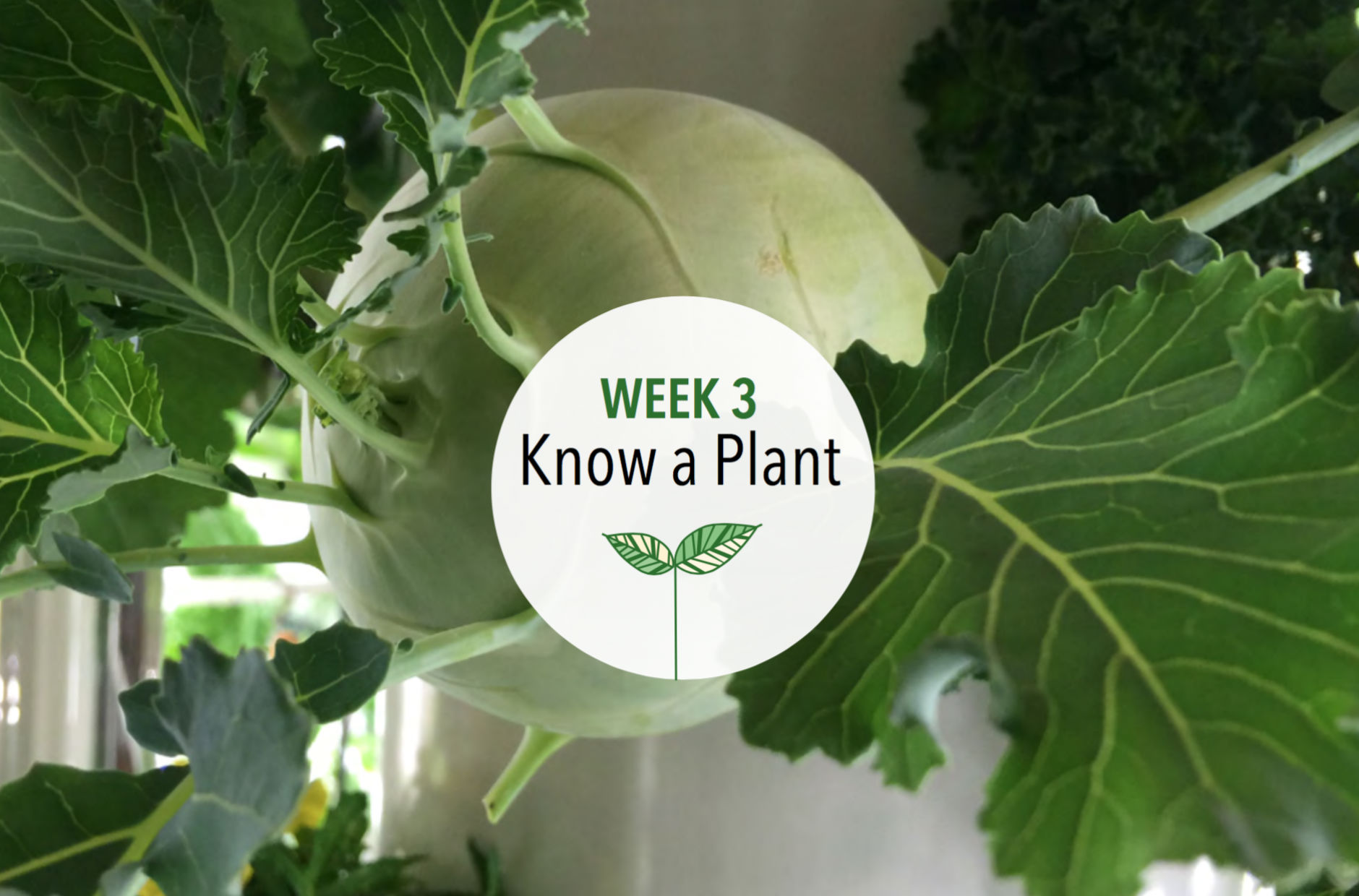 Week 3: Know a Plant