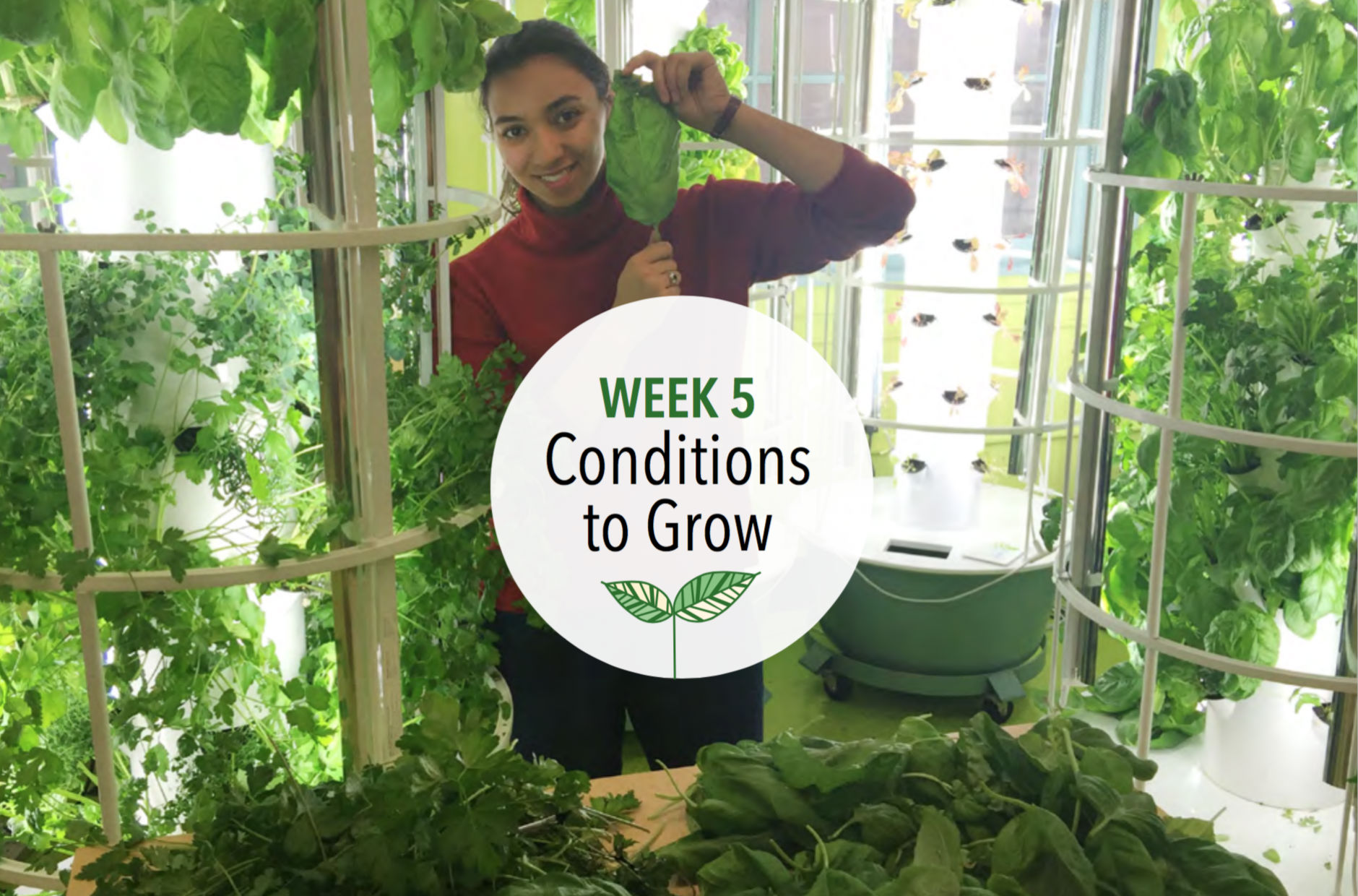 Week 5: Conditions to Grow