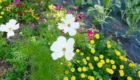 20180718-105909-garden.2482