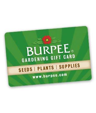 Burpee Gift Card #4
